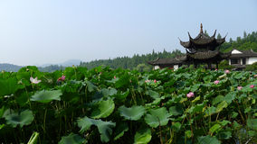 Hangzhou west lake,Lotus Stirred by Breeze in Quyuan Garden Stock Images