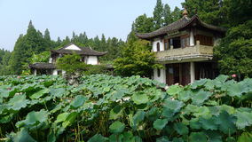 Hangzhou west lake,Lotus Stirred by Breeze in Quyuan Garden Royalty Free Stock Images