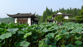 Hangzhou west lake,Lotus Stirred by Breeze in Quyuan Garden Royalty Free Stock Photography