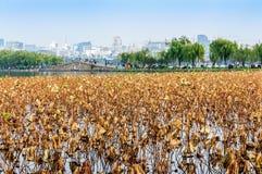 Hangzhou west lake lotus Stock Images