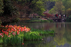 Hangzhou West Lake Park in spring Royalty Free Stock Photography