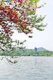 Hangzhou west lake the peach blossom in full bloom, in China Stock Images