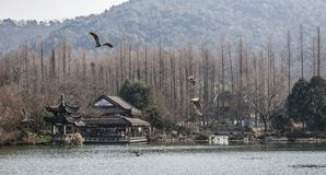 Hangzhou West Lake Scenic Area. Birds passing the Hangzhou West Lake Scenic Area, Early spring, Zhejiang province, China Stock Images