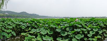 Hangzhou west lake royalty free stock photos