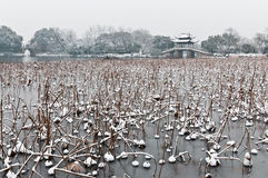 Hangzhou winter scenery Stock Images