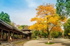 Hangzhou xixi wetland park scenery Royalty Free Stock Images