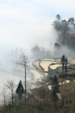 hani mgły paddyfield taras Obraz Stock