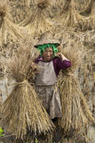 Hani Rice Farmer in China Royalty Free Stock Photography