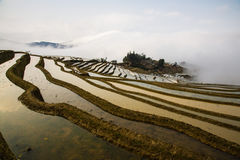 Hani Rice Terraces Royaltyfri Foto