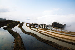 Hani Rice Terraces Royaltyfria Bilder