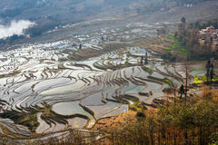 Hani Rice Terraces Royaltyfri Fotografi