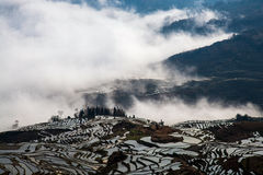 Hani Rice Terraces Royaltyfri Bild