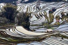 Hani Rice Terraces Fotografia Stock Libera da Diritti