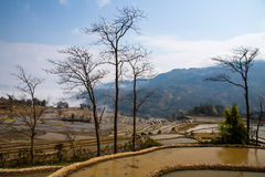 Hani Rice Terraces Royaltyfria Foton