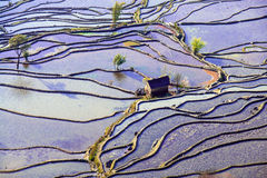 Hani Rice Terraces Arkivfoton