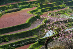 Hani Rice Terraces Fotografia Stock