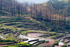 Hani Rice Terraces immagine stock
