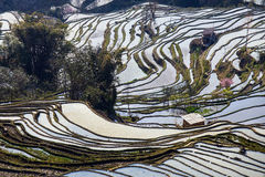 Hani Rice Terraces Royalty Free Stock Photography
