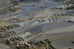 Hani terraced fields  in  southwest  china Royalty Free Stock Image