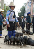 Hani Woman Selling Piglets. A stern Hani woman holds the leashes of her black piglets for sale at a local market in Yuanyang, southern Yunnan province, China Royalty Free Stock Images