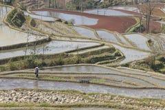 Hanivrouw die in een padieveld in YuanYang werkt royalty-vrije stock afbeelding