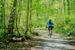 Track leading into lime green leafed forest. HANMER SPRINGS, NEW ZEALAND - OCTOBER 8 2018; Track leading into lime green leafed forest with cyclist in blue shirt stock images