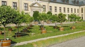 Hannover, Germania Un boschetto dei limoni, dei mandarini e delle arance dell'agrume piantati in vasi vicino ad un bello palazzo  stock footage