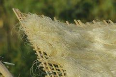 Hanoï, Vietnam : des vermicellis de marante arundinacée les nouilles vietnamiennes spéciales sont séchés sur les barrières en bam photos libres de droits