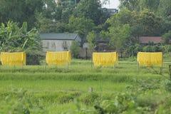 Hanoï, Vietnam : des vermicellis de marante arundinacée les nouilles vietnamiennes spéciales sont séchés sur les barrières en bam photographie stock libre de droits