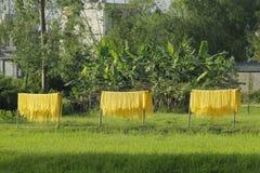 Hanoï, Vietnam : des vermicellis de marante arundinacée les nouilles vietnamiennes spéciales sont séchés sur les barrières en bam photos stock