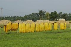 Hanoï, Vietnam : des vermicellis de marante arundinacée les nouilles vietnamiennes spéciales sont séchés sur les barrières en bam images libres de droits