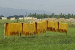 Hanoï, Vietnam : des vermicellis de marante arundinacée les nouilles vietnamiennes spéciales sont séchés sur les barrières en bam image libre de droits