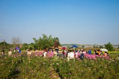 Hanoï, Vietnam - 10 janvier 2016 : Les jeunes serrés prenant la photographie dans le jardin d'agrément par la rivière rouge Prena Images stock