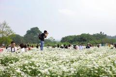 Hanoï, Vietnam - 20 novembre 2018 : Un photographe est pousse sur le champ de marguerite pour préparer la récolte, novembre 2018  image libre de droits