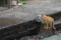 Hanoi Street Cat. A young cat playing on the edge of a train track in central Hanoi, Vietnam Stock Photography