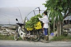 Hanoi, Vietnam - 28 agosto 2015: La giovane donna carica il fiore giallo della margherita sul motociclo dopo la raccolta per la c Immagini Stock Libere da Diritti