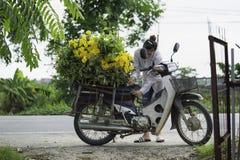 Hanoi, Vietnam - 28 agosto 2015: La giovane donna carica il fiore giallo della margherita sul motociclo dopo la raccolta per la c Fotografie Stock
