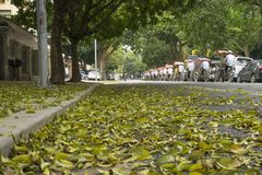 Hanoi, Vietnam - April 13, 2014: Traffic on street in falling season in Hanoi, Vietnam with a lot of yellow leaves laying on groun. D royalty free stock photos
