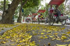 Hanoi, Vietnam - April 13, 2014: Traffic on street in falling season in Hanoi, Vietnam with a lot of yellow leaves laying on groun. D stock images