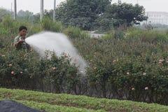 Hanoi, Vietnam - 21 de octubre de 2015: agua del granjero las plantas a su campo en luz del día Imagen de archivo