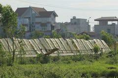 Hanoi, Vietnam: die Pfeilwurzsuppennudeln, die spezielle vietnamesische Nudeln sind, werden auf den Bambuszäunen getrocknet, die  Stockfoto