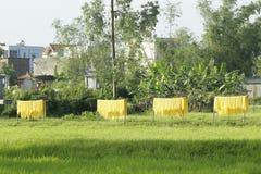 Hanoi, Vietnam: die Pfeilwurzsuppennudeln, die spezielle vietnamesische Nudeln sind, werden auf den Bambuszäunen getrocknet, die  Lizenzfreie Stockbilder