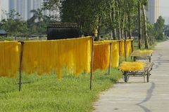 Hanoi, Vietnam: die Pfeilwurzsuppennudeln, die spezielle vietnamesische Nudeln sind, werden auf den Bambuszäunen getrocknet, die  Lizenzfreies Stockfoto