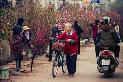 Hanoi Vietnam - 13 Februari, 2015: Den gamla kvinnan går med hennes cykel för att köpa persikaträd i blommamarknaden för traditio Royaltyfri Fotografi