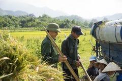 Hanoi, Vietnam 6 giugno: Gli agricoltori non identificati lavorano al giacimento del riso nella stagione del raccolto il 6 giugno Immagini Stock