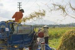 Hanoi, Vietnam 6 giugno: Gli agricoltori non identificati lavorano al giacimento del riso nella stagione del raccolto il 6 giugno Fotografia Stock Libera da Diritti