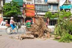 Hanoi, Vietnam - Juni 14, 2015: Gevallen die boom op straat door natuurlijk zwaar windonweer wordt beschadigd in Tam Trinh-straat Stock Afbeeldingen
