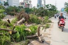 Hanoi, Vietnam - Juni 14, 2015: Gevallen die boom op straat door natuurlijk zwaar windonweer wordt beschadigd in Tam Trinh-straat Royalty-vrije Stock Foto's