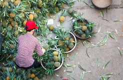 HANOI, VIETNAM - MAY 24, 2017: Vietnamese worker sorting big amount of pineapple fruit into smaller containers for street sellers. Fruit is sold everywhere in stock photography