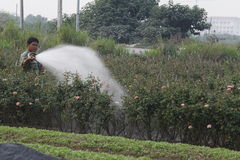 Hanoi, Vietnam - Oktober 21, 2015: landbouwerswater de installaties aan zijn gebied op daglicht Stock Afbeelding